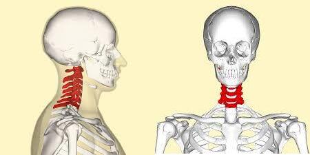 neck bone